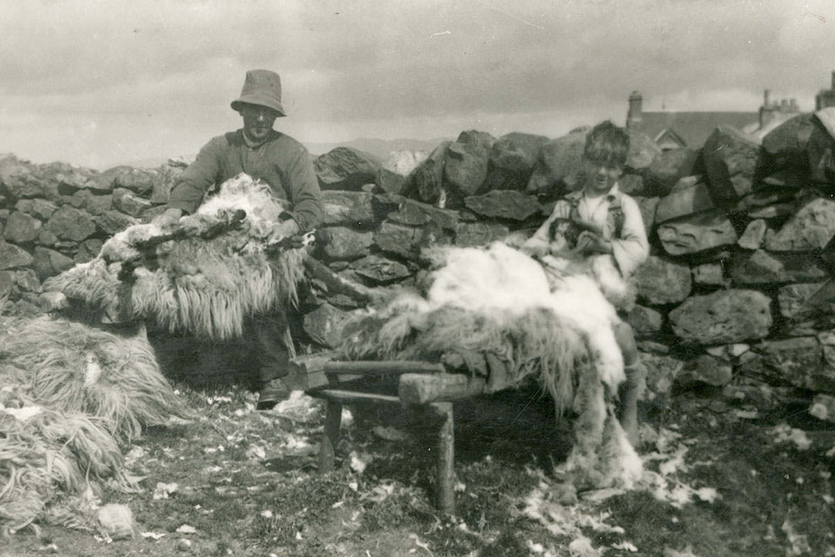 historic-sheep-shearing-farmer resized.jpg